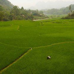 пътешествие в Югоизточна Азия