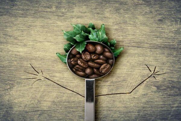 Какво знаем за ползата от зеленото кафе